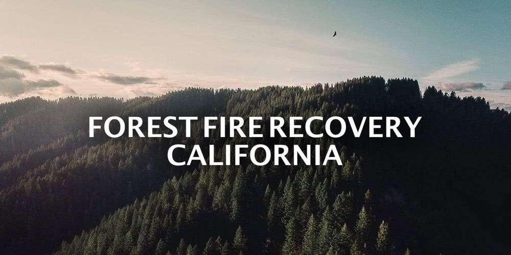 Trees in California